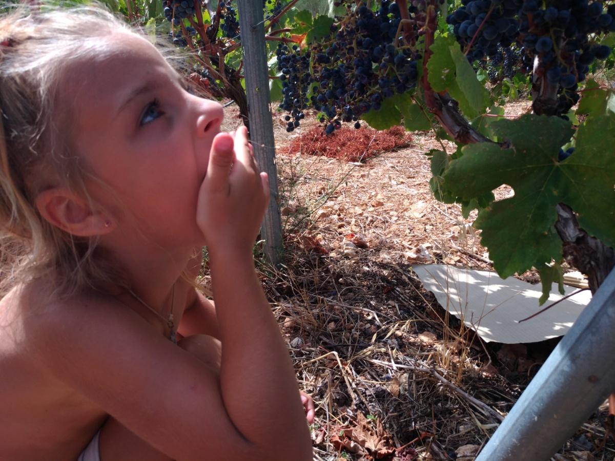 На виноградных полях Art & wine winery